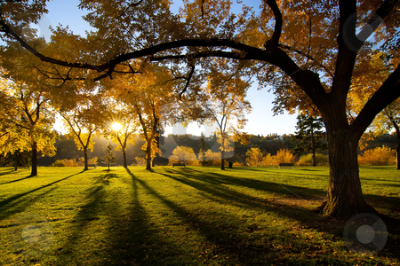 Cutcaster-photo-800889984-Sun-Shining-in-Park